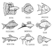 Isolated Aquarium Fish Collect...