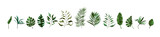 Collection of tropical greenery leaf plant herbs leaves monstera palm