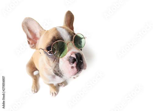 Poster Bouledogue français Cute french bulldog siting isolated
