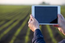 Farmer Working On Tablet In Field