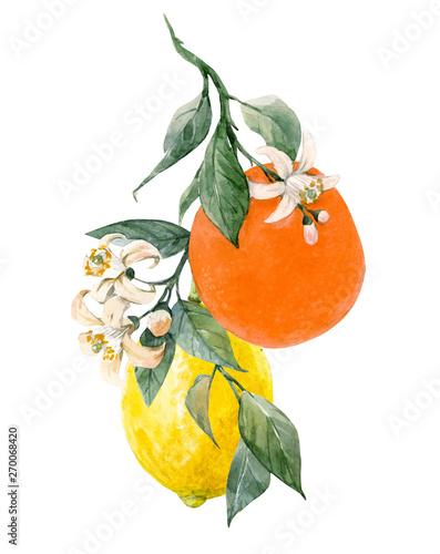Foto Watercolor citrus fruits illustration