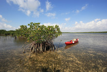 Red Kayak Tied To A Red Mangove Tree On Turtle Grass Beds On The Flats Of Biscayne National Park, Florida.