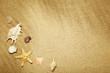 Different seashells on beach sand