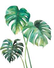 Watercolor Tropical Leaves Pos...