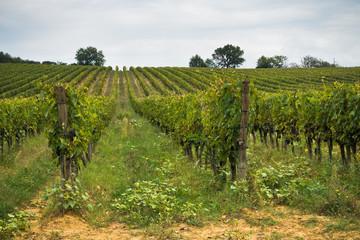 Fototapeta na wymiar Hiking hills, backroads and vineyards at autumn, near Siena in Tuscany, Italy