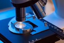 Microscope Detail Analyzing Semen Samples