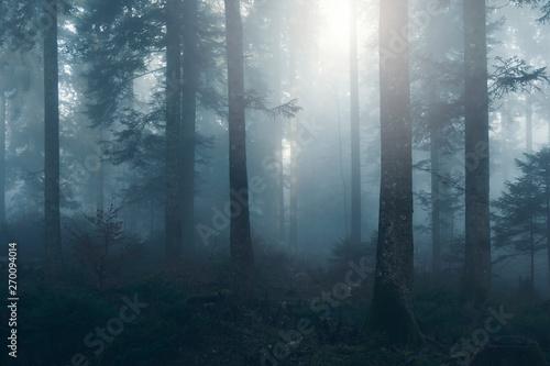promienie-slonca-i-pnie-drzew-w-lesie