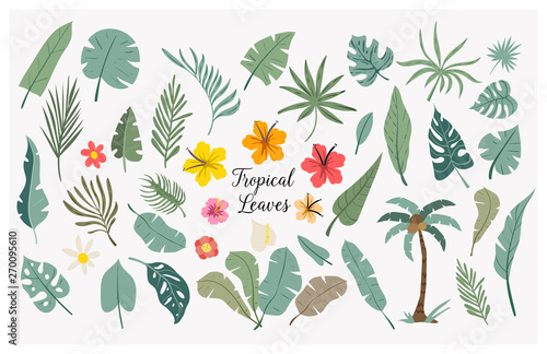 Vector set of tropical leaves. Palm, monstera, banana leaf, hibiscus, plumeria flowers.