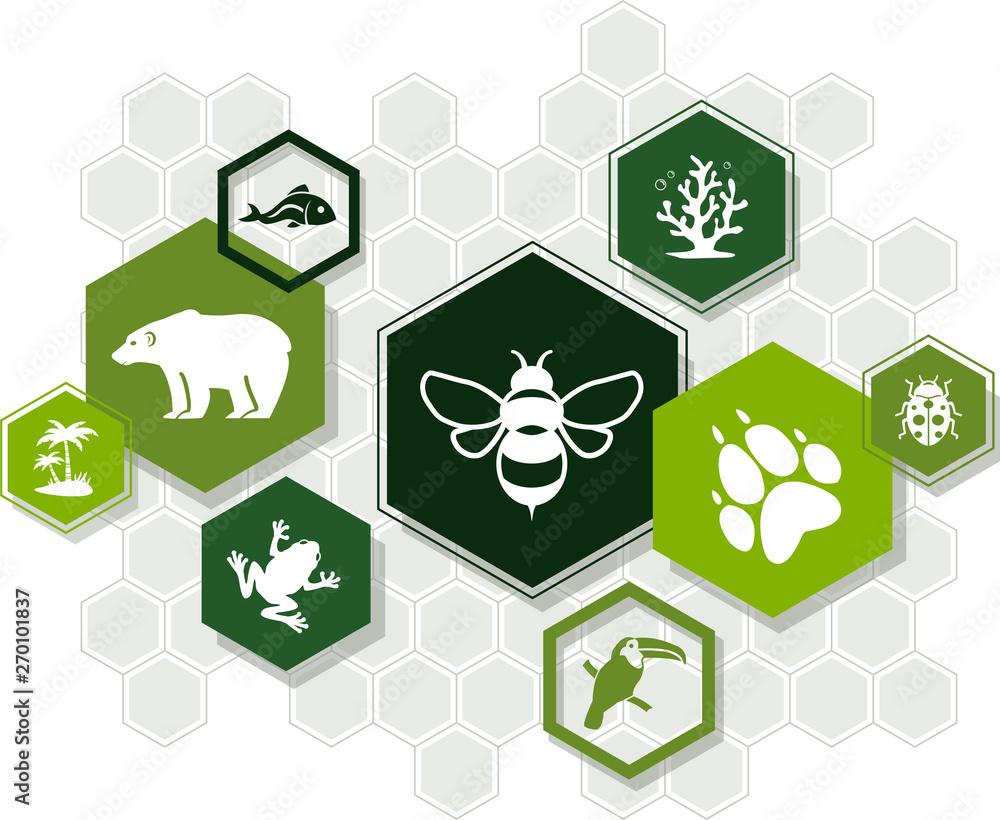 Fototapeta biodiversity icon concept – endangered species & biological diversity icons, vector illustration