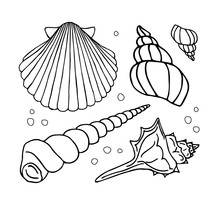 Vector Hand Drawn Doodle Sketch Set Collection Of Different Shell Isolated On White Background