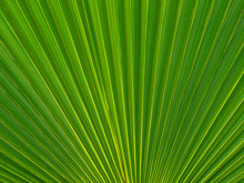Abstract Green Palm Tree Leaf ...