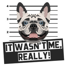 Mugshot Polizeifoto Französische Bulldogge