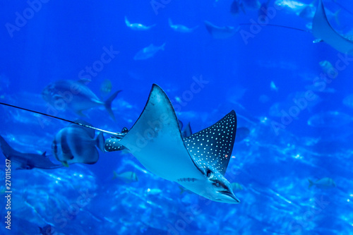 Photo Ocean Animals - 15