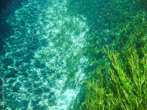 Fotografija  Underwater view with water plants at Sucuri river in Bonito, Mato Grosso do Sul