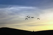 Birds Flying Above Sky during Sunset. Silhouette of Seagulls.