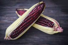 Purple Corn Fresh On Cob On Wooden Dark Background - Siam Ruby Queen Or Sweet Red Corn - Selective Focus