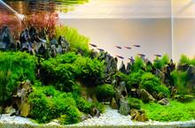 Image Of Landscape Nature Style Aquarium Tank.