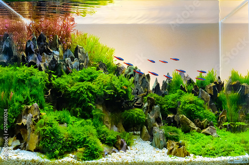 Carta da parati Image of landscape nature style aquarium tank.
