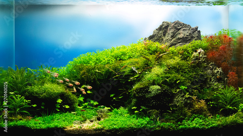 Leinwand Poster nature style aquarium tank with aquatic plants