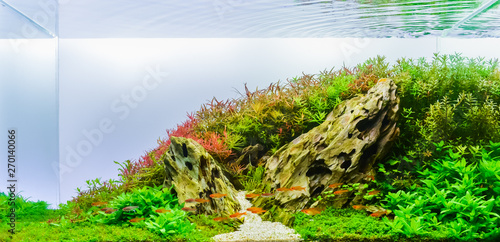 Photo Image of landscape nature style aquarium tank.