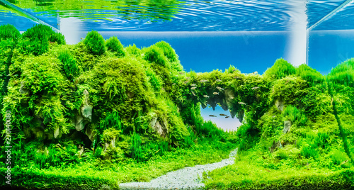 Spoed Fotobehang Groene nature style aquarium tank with dragon stone .