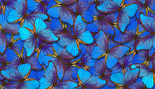 Shades Of Blue. Wings Of A Butterfly Morpho. Flight Of Bright Blue Butterflies Abstract Background.