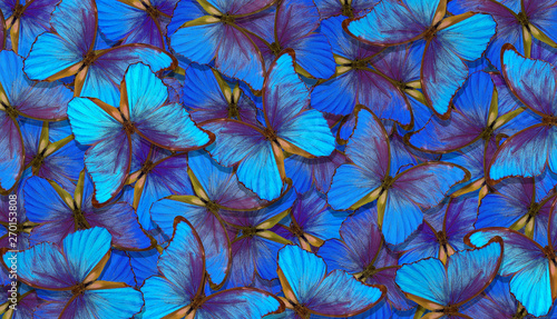 Fotografie, Obraz  Shades of blue