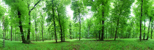 Foto auf Gartenposter Baume Panorama of green forest at spring landscape