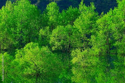 Photo Stands Green 新緑の錦秋湖