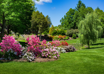 Azaleas and rhodendrons flowering in a park setting.