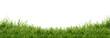 Leinwandbild Motiv Fresh green grass isolated against a white background