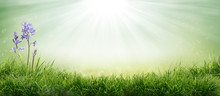Lush Spring Green Grass Background With A Sunny Summer Blue Sky Over Fields And Bluebell Pastures.