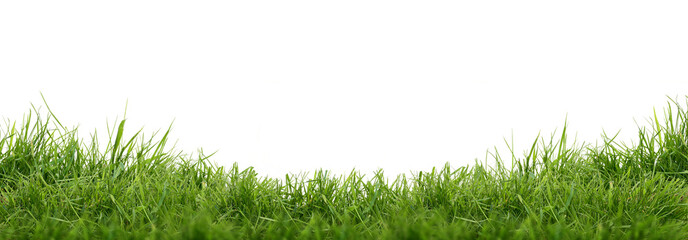 Fresh green grass isolated against a white background