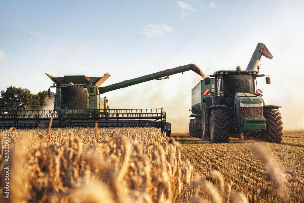 Fototapeta Mähdrescher und Traktor bei der Ernte auf einem Weizenfeld