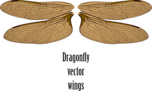 Carefully Drawn Graceful Wings...