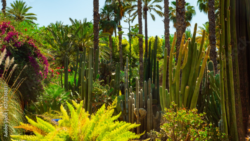 Jardine Majorelle In Marrakesh, Morocco, Africa, Yves Saint Laurent magic garden Canvas Print