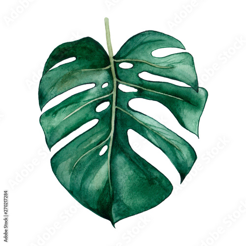 Hand drawn watercolor tropical plants set. Exotic palm leaves, jungle tree, brazil tropic botany elements.