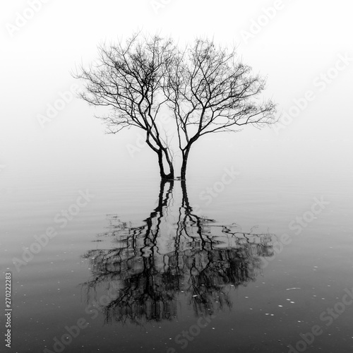 Poster Gris Flooded Tree