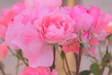 Petals Romantic Flowers Pink M...