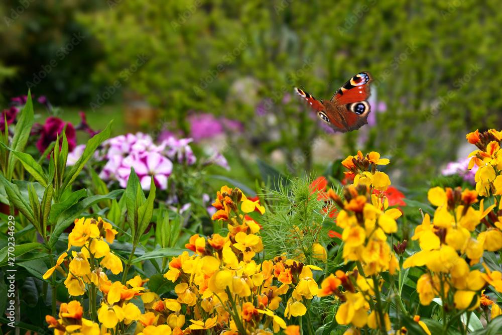 Schmetterling 578