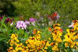 Schmetterling 578 - 270234629