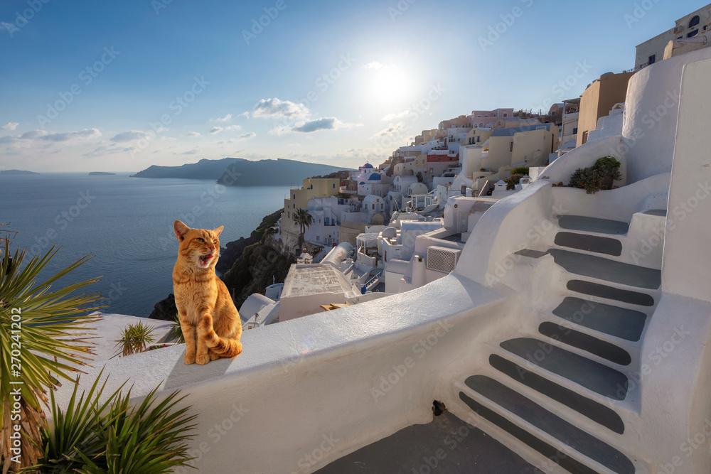 Fototapeta Ginger cat relaxing on the stairwell during sunset, Santorini, Greece