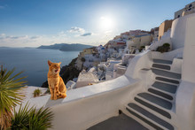 Ginger Cat Relaxing On The Stairwell During Sunset, Santorini, Greece
