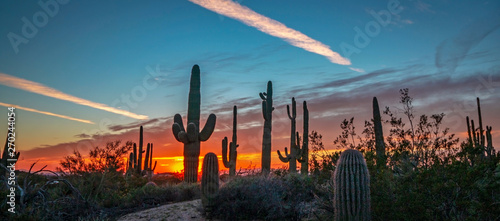 Spoed Foto op Canvas Cactus AZ Desert Landscape Image At Sunset