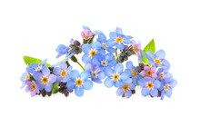 Amazing Spring Forget-me-not F...