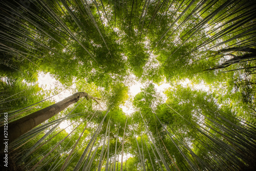 Bamboo Forrest shot straight up into the sky with fish-eye lens. Wallpaper Mural