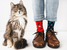 Charming, Gray Kitten And Men's Legs, Stylish Shoes, Blue Pants And Bright, Colorful Socks On A White, Isolated Background. Close-up. Studio Photo. Concept Of Lifestyle, Fun And Elegance.