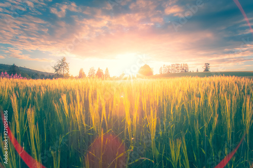 Montage in der Fensternische Khaki Finnish barley field in sunset. Photo from Sotkamo, Finland.