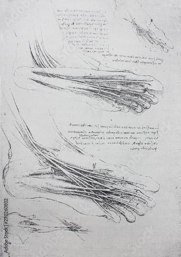 Obraz na plátně Anatomical notes
