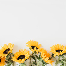 Sunflowers On White Background. Flat Lay, Top View.